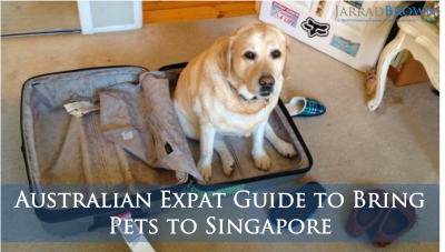 Australian Expat Guide to Bring Pets to Singapore - Jarrad Brown - Financial Planner to Australian Expats in Singapore LI