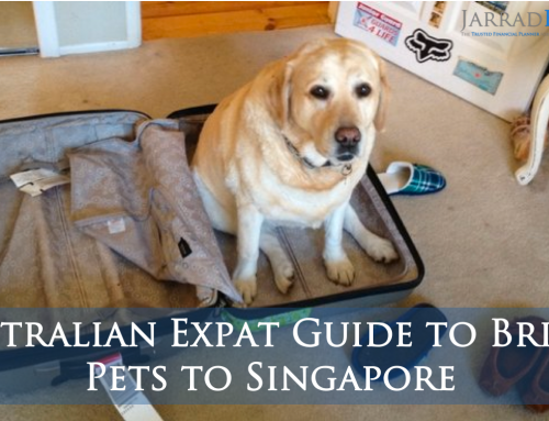 Australian Expat Guide to Bringing Pets to Singapore